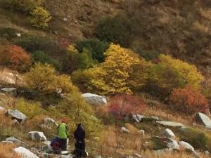 10月紅葉の四婆山行